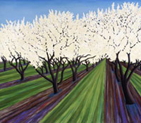 Almond Blossoms, 2007